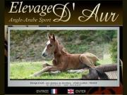 Elevage D'Aur - Anglo-Arabe Sport